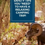 Wildlife Safety Tips you Need for your outdoor adventure