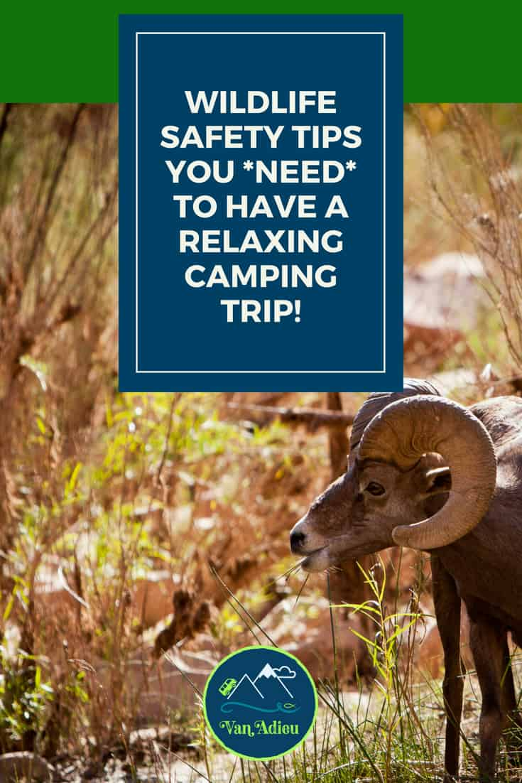 Wildlife Safety Tips you Need for your next hiking, camping or outdoor adventure!