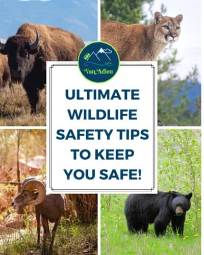 Wildlife Safety Tips for your camping and outdoor adventures