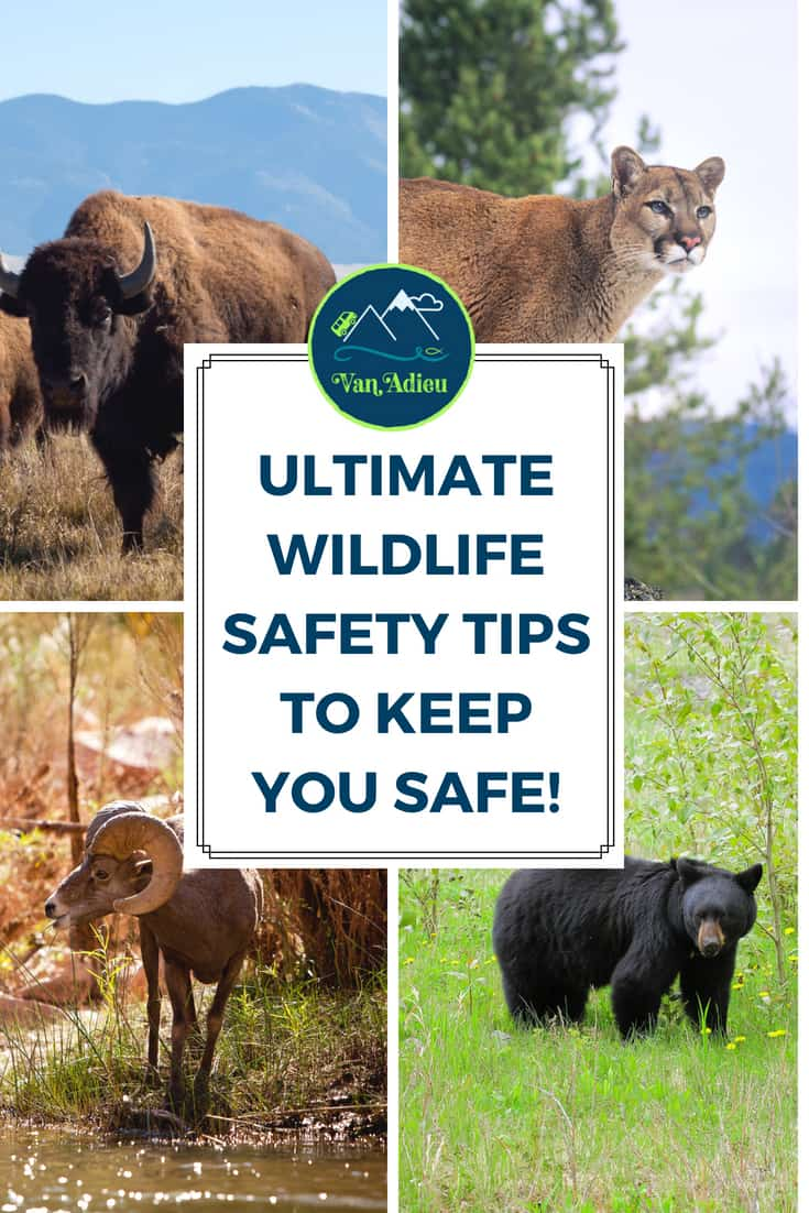 These are the ULTIMATE Wildlife Safety Tips for your camping and outdoor adventures!