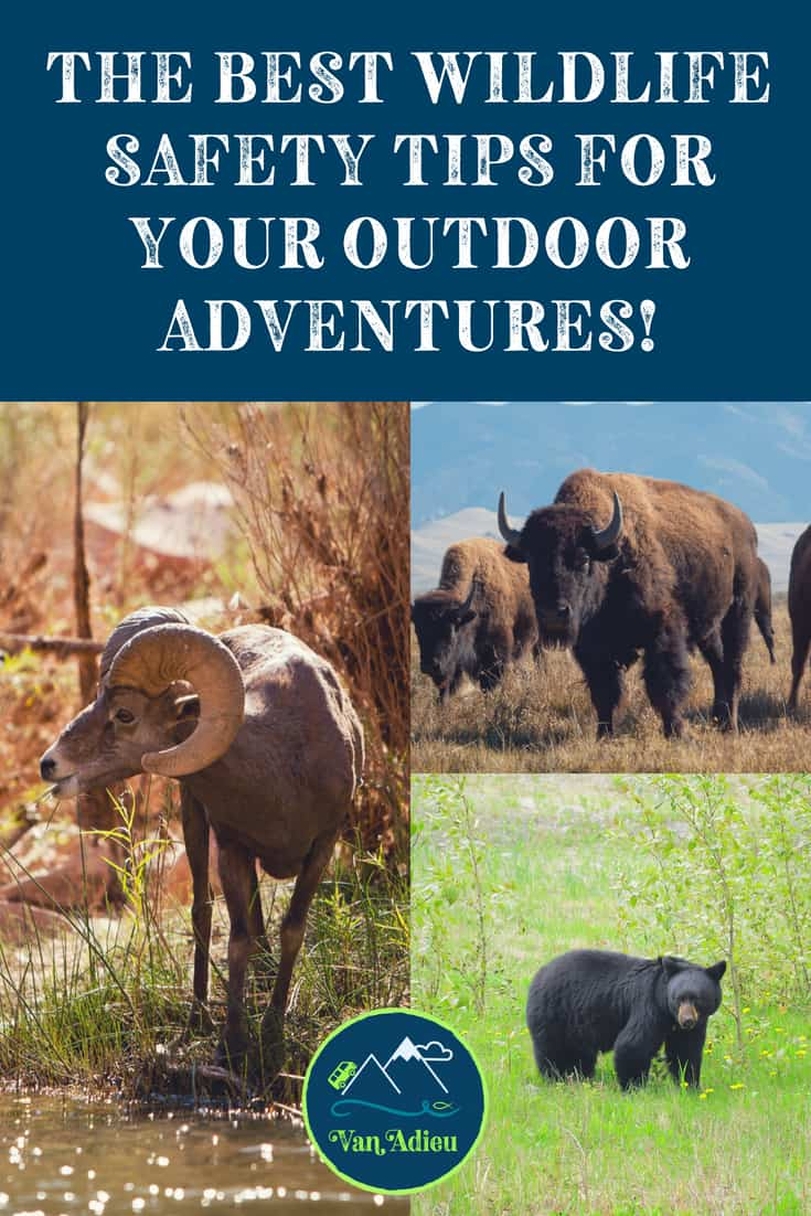 Hiking, camping, having an adventure? Ultimate Wildlife Safety Tips you NEED to know!