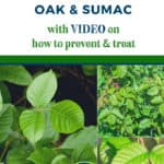 Poison Ivy oak and sumac