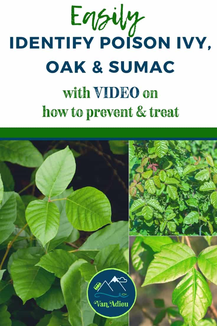 Learn to Identify, Prevent and Treat Poison Ivy oak and sumac rash!