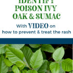 Poison Ivy, Poison Oak and Sumac