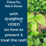 Poison ivy, oak, sumac